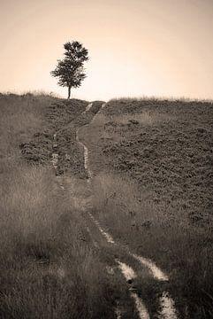 Tree and path sur Douwe Schut