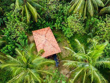 Reisfelder in Sri Lanka IV von Nicole Nagtegaal