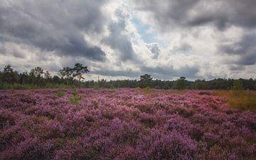 Heide bewolkt van natascha verbij