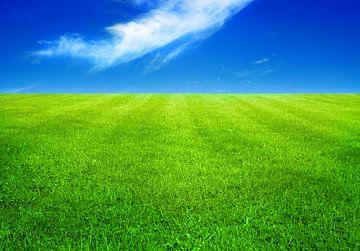 Groene weide van BVpix