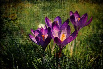 Spring von Dagmar Marina