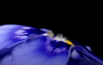 Viool in blauw van Marlies Prieckaerts