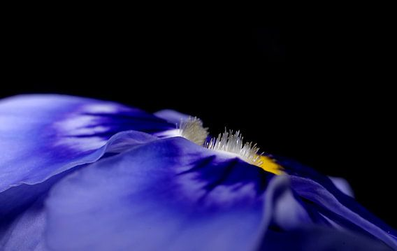 Viool in blauw