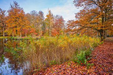 Herbst im Wald mit einem bunten Schildkragen von eric van der eijk