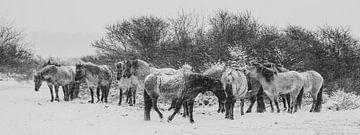 Konikpaarden in zwart wit van Dirk van Egmond