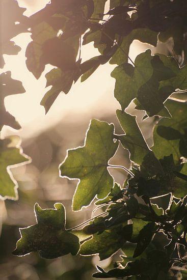 Zonnebladeren