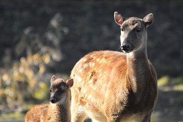Hirschfamilie von Nicolette Vermeulen
