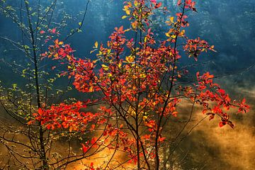 Autumnmood | Twickel Delden (6) von Rob van der Pijll