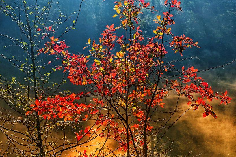 Autumnmood | Twickel Delden (6) van Rob van der Pijll