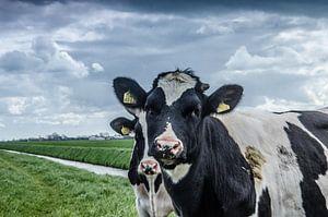 Koeien op de dijk van Wilfred Hulshof