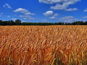 Getreidefeld 8 von Edgar Schermaul