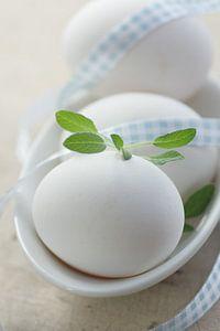 Frische Eier Landleben