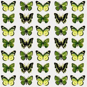 En Garde les Papillons Farcis!! sur