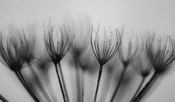 weiß schwarz Winter von Tania Perneel