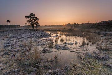 Kalten Morgen auf den Seen Overasselt FENS  von Jan Koppelaar