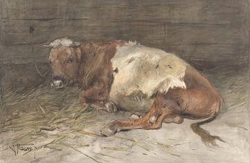 Jeune taureau couché, Anton Mauve