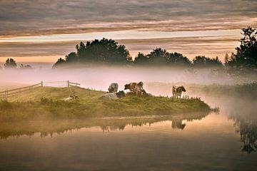 Niederlande, Tienhoven, Kühe im Morgennebel im Molenpolder. von Frans Lemmens