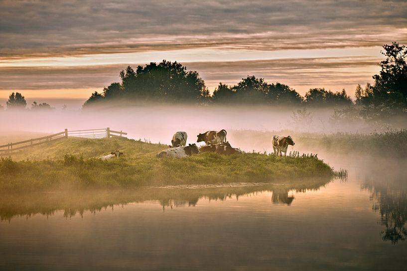 Pays-Bas, Tienhoven, Vaches dans le brouillard matinal à Molenpolder. sur Frans Lemmens
