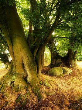 Old Trees with Stones van Jörg Hausmann