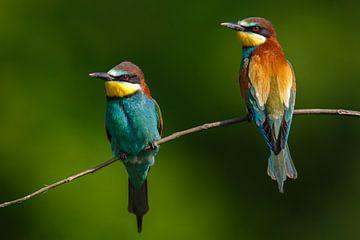 2 kleurrijke vogels van