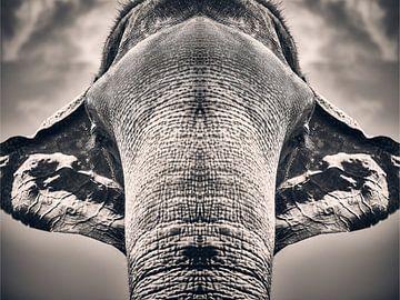 Majestätische Symmetrie von Graham Forrester