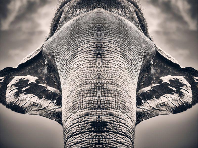 Majestueuze symmetrie van Graham Forrester