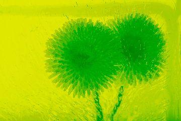 2 Bellis in het groen van Marc Heiligenstein