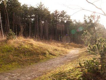Hoornse Bos, Terschelling von Rinke Velds