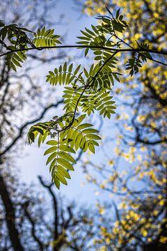 Tegenlicht bladeren van Jefra Creations
