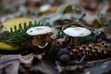 Herfst in het bos van ProPhoto Pictures