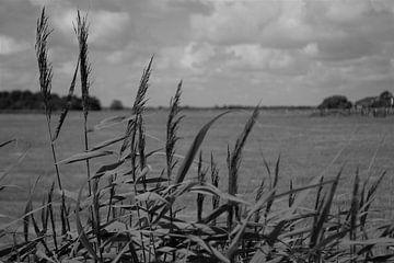 Texels landschap in zwart/wit van Henk van der Sloot