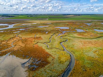 Texel - De Schorre - Rode Zeekraal 04 van Texel360Fotografie Richard Heerschap