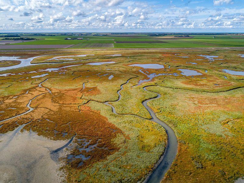 Texel - Le rauque - Red Marsh samphire 04 sur Texel360Fotografie Richard Heerschap
