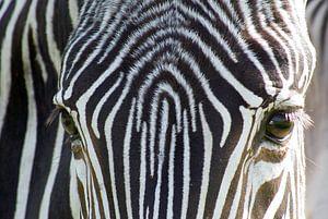 Zebra van Anita Vromans