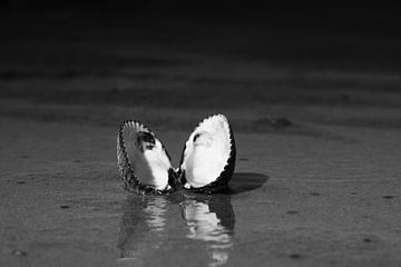 Schelp in zwart wit van Dennis Schaefer