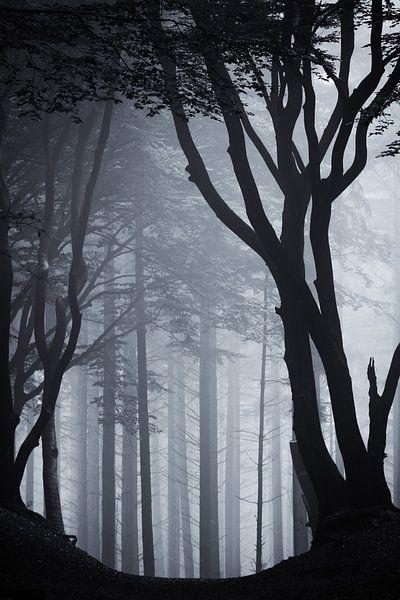 Heilige silhouet van Tvurk Photography
