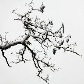 Stamboomstructuur van Ludo Verhoeven