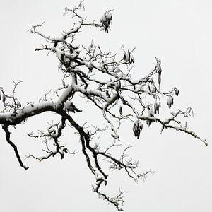 Stamboomstructuur van