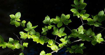 Blätter mit Licht von Bianca ter Riet