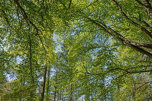 Waldspaziergang im Frühling