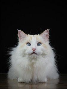 Auge in Auge mit der Katze