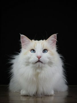 Oog in oog met kat