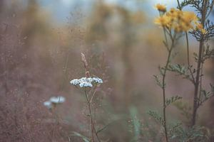bloemen part 167 van Tania Perneel