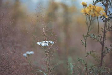 Blumen Teil 167