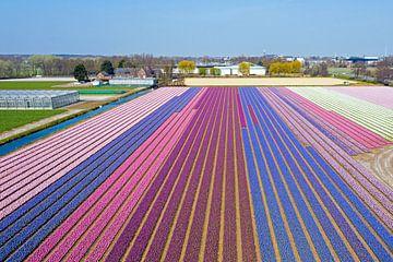 Luftaufnahme von Frühlingstulpenfeldern in den Niederlanden von Nisangha Masselink