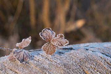 Blad met ijskristallen von CreaBrig Fotografie