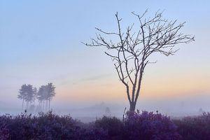 Sonnenaufgang auf der violetten Heide