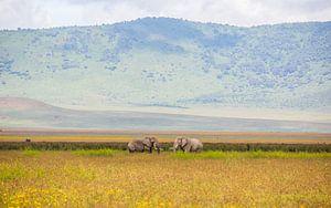 Olifanten in Ngorongoro krater