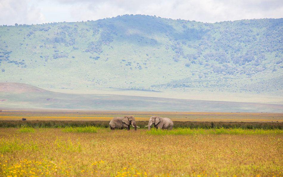 Olifanten in Ngorongoro krater van Leon van der Velden