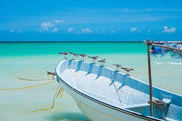 Meeuwen zittend op een witte boot met een blauwe lucht in Isla Holbox, Mexico van Michiel Dros